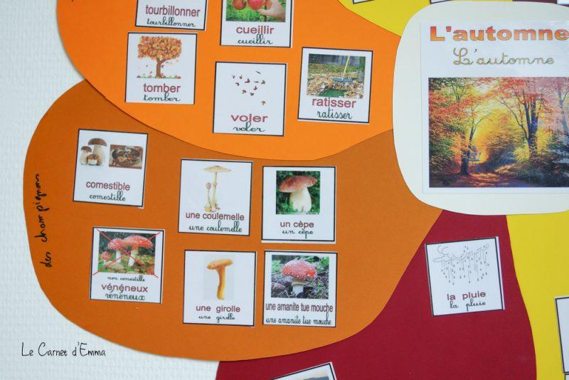 Fleur d'automne, activité, lexique, langage